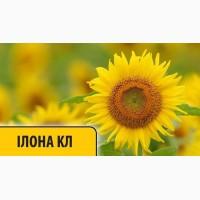 Купить семена подсолнечника Илона КЛ