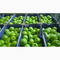 Продаем яблоки Муцу оптом по цене от производителя с доставкой
