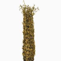Семена сои сорт Чара. Урожай 2019 года