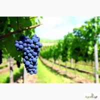 Земельные участки с закладкой виноградника в Крыму - 9 км от моря - 7 га - 990 000 руб