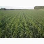 Продажа пшеницы 4 кл.опт