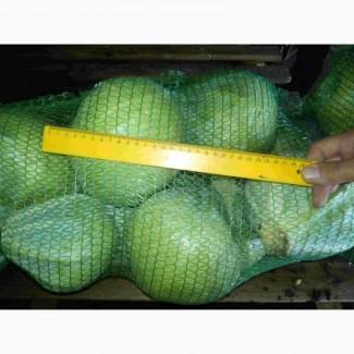 Капуста оптом от производителя 6, 5 р./кг
