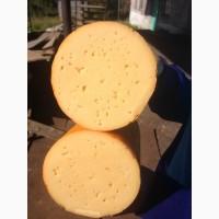 Продам: сыр Золотое Кольцо 383 р/кг