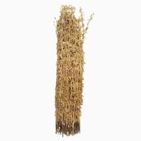 Семена сои сорт Селена. Урожай 2019 года