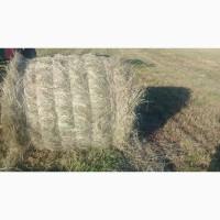 Продаем сено в рулонах, урожай этого года
