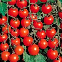 Семена томат Черри Блосэм 1000 шт