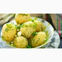 Картофель оптом. Заработайте с нами много и быстро
