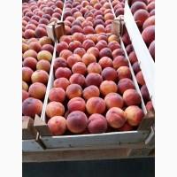 Персик сорта Инжир по цене от производителя