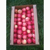 Яблоко Оптом красное
