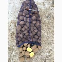 Продаём картофель продовольственный оптом