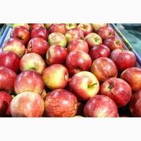 Доставка яблок Гала любую точку России и ближнего зарубежья