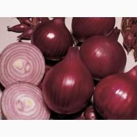 Лук репчатый фиолетовый Ред Барон