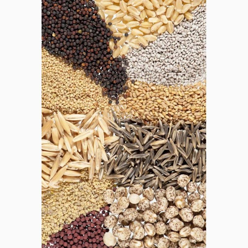купить семена декоративной травы