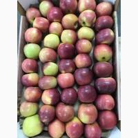 Яблоки. Урожай 2018 года