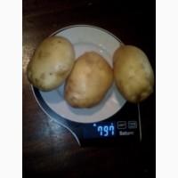 Картофель урожай 2020 г