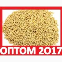 ᐉ 2017 Оптом ЯДРО КЕДРОВОГО Ореха Купить Новосибирск! Цена Ядро Кедровое Орехи Экспорт