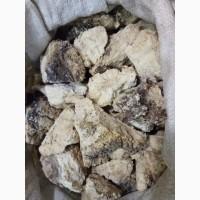 Агарикус (Лиственничная губка) (оптом от 5кг)