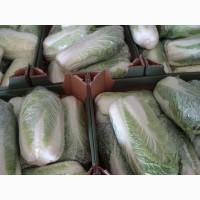 Пекинская капуста по доступным ценам от производителя