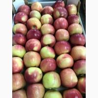 Яблоки с садов Краснодарского края