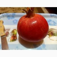 Гранат нового урожая сорта Baladi, Wonderful производство Египет без таможенной очистки