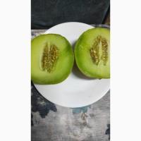 Дыня Канталупа оптом
