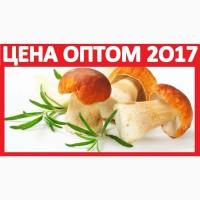 ᐉ 2017 ГРИБЫ БЕЛЫЕ Купить Сушёные Цена! Оптом Замороженные Грибы Сухие Новосибирск