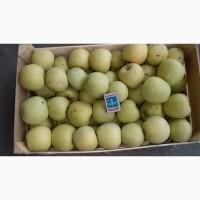 Продам яблоки оптом от производителя, Крым