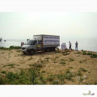 Перевозка живой рыбы в специализированных живорыбных контейнерах