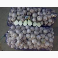 Белый лук по оптовым ценам от производителя