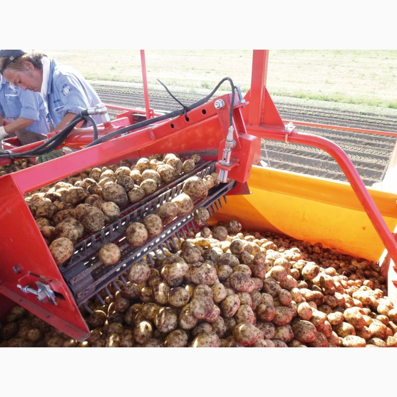 Фото 5. Техника для возделывания лука и картофеля Imac