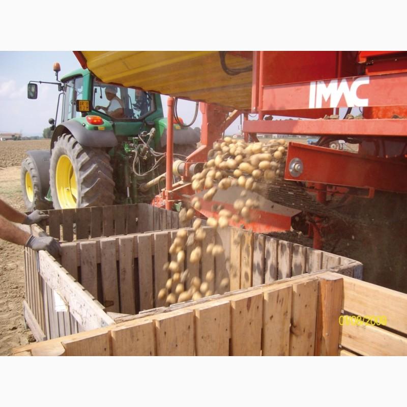 Фото 6. Техника для возделывания лука и картофеля Imac