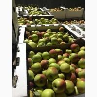Яблоки калиброванные оптом, в коробках, отгрузка из сада, пригород Краснодара
