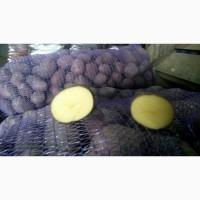 Картофель оптом 5+ от 9 р/кг