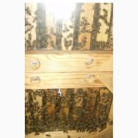 Продам пчелосемьи в Крыму апрель 2019 Карника