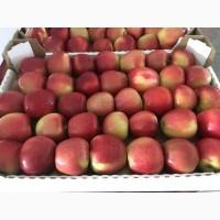 Краснодарские яблоки оптом