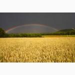 Продаем пшеницу 3 класса оптом
