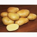 Магазин семенного картофеля. Оптовые и розничные поставки семя картофеля