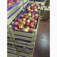 Предлагаем приобрести оптом яблоки Беш Юлдуз по цене от производителя