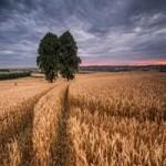 Продаем пшеницу 4 класса оптом