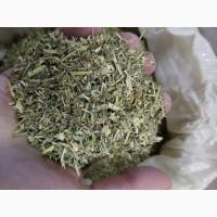 Якорцы стелющиеся трава рез 15-20 мм 2017 год (оптом от 5кг)