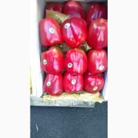 Продам болгарский перец цветной