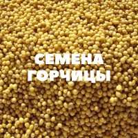 Продам семена горчицы на посев