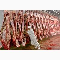 КРС мясо на экспорт-баранина, телятина, говядина на Мусульманские страны