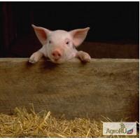 Адсорбент токсинов Ковелос-Сорб для всех видов сельхозживотных