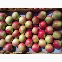 Яблоки собственного производства