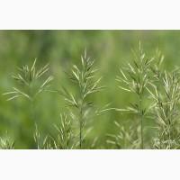 ООО НПП «Зарайские семена» продает семена костреца безостого оптом и в розницу