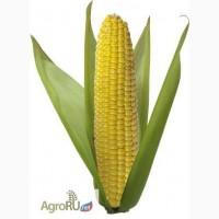 Гибриды семена кукурузы Pioneer ПР39Д81 (ФАО 260)