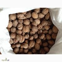 Продам сухой хороший грецкий орех из Краснодара