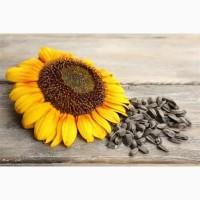 Семена подсолнечника (гибриды системы SUMO)