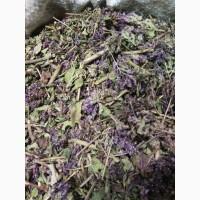 Душица обыкновенная резанная 20 мм под чай Алтай (оптом от 5кг)
